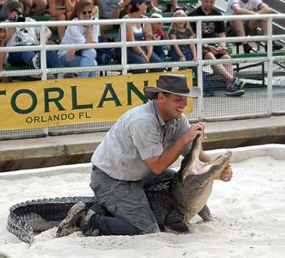 alligatorwrestle1